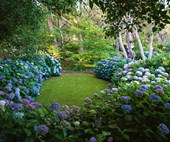 A hydrangea garden designed to perfection in Margaret River, WA