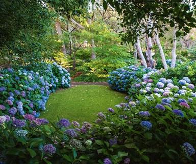 A hydrangea garden designed to perfection in Margaret River, WA