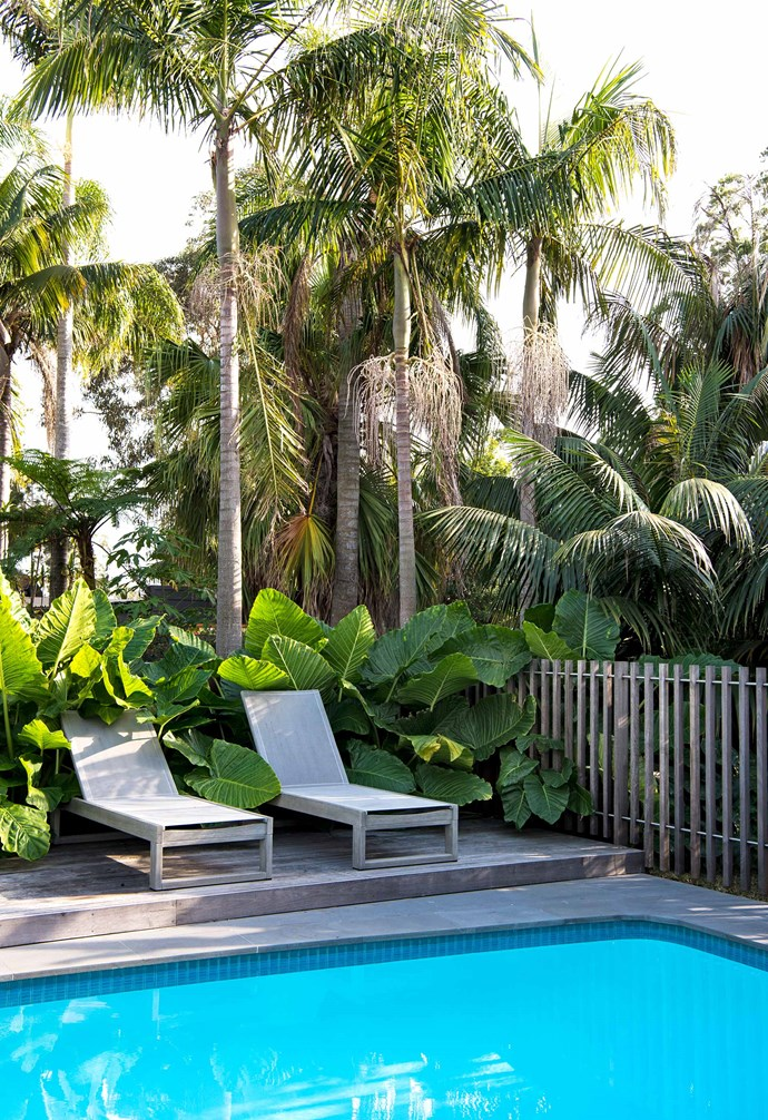"**Pool** The pool's deck is also spotted gum and matches Dru's timber daybeds from West Elm. ""I wanted bold shapes so the elephant's ears were my main must-have plant,"" says Dru."