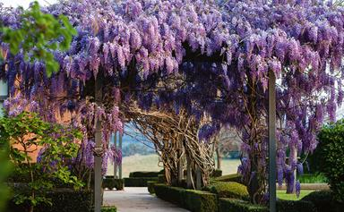 An Australian formal garden in Cobbity, NSW