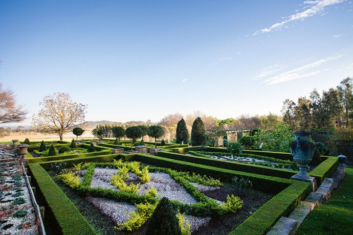 "This knot garden is based on a design at Hampton Court Palace. Inside the squares white quartz chippings are used as a foil for the green hedges. The yellow hedging is golden privet; [succulents such as echeveria](https://www.homestolove.com.au/types-of-succulents-13684|target=""_blank"") are in the far right box with cones of clipped box and standard citrus breaking the strong horizontal lines. ""We've used box, santolina and lavender and repeated some of the plantings in the area near the vegetable garden with bay trees in big square pots and cones of box,"" says Nola."
