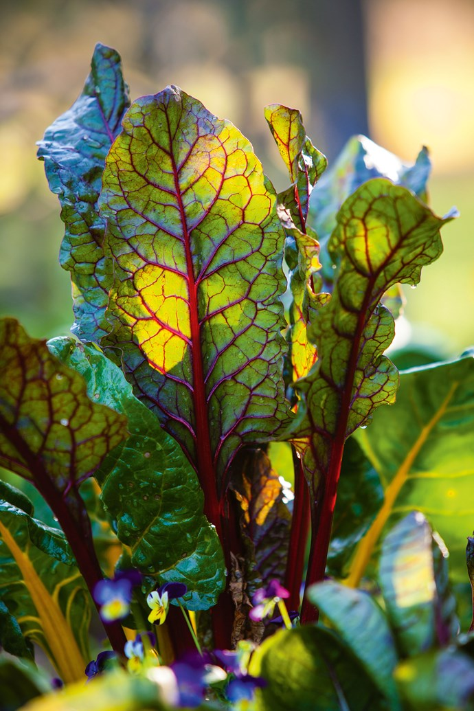 "Bright leaves of [rainbow chard](https://www.homestolove.com.au/5-easy-to-grow-vegetables-5685|target=""_blank"")."