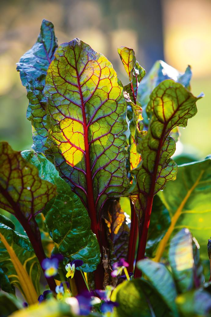"""Bright leaves of [rainbow chard](https://www.homestolove.com.au/5-easy-to-grow-vegetables-5685