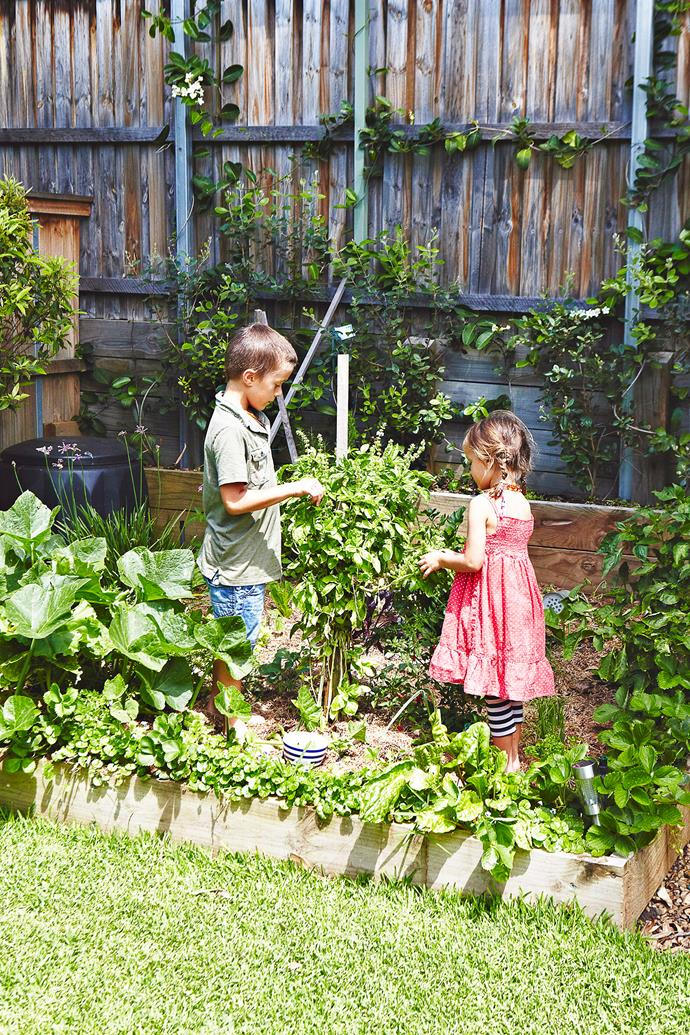 A vegie patch is a great way to get the kids involved with gardening. *Photo:* Michael Wee