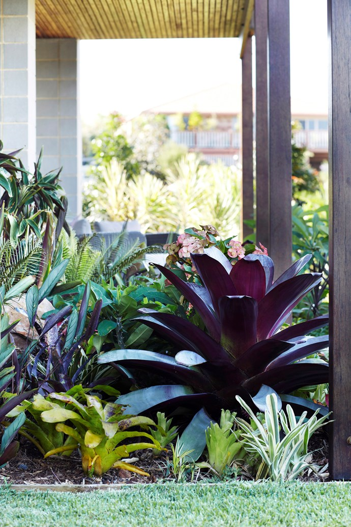 Have a clear idea of the style of garden you want *before* you pick your plants to avoid creating a mismatch of clashing species. *Photo:* Alicia Taylor / *bauersyndication.com.au*