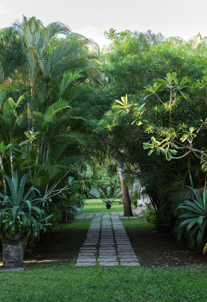 Tropical gardens are all about creating contrast. Here, a formal pathway of stepping stones is flanked by the unruly foliage of tall palms and other tropical plantings. *Photo: Nick Watt / bauersyndication.com.au*