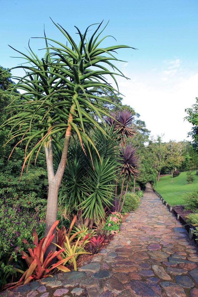 Tropical plantings in contrasting colours line a stone pathway. *Photo: Anastasia Kariofyllidis / bauersyndication.com.au*