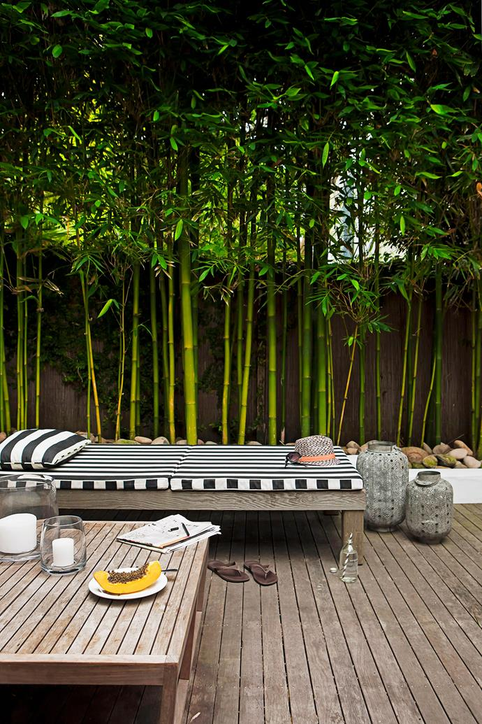 "Bamboo is a [fast-growing screening plant](https://www.homestolove.com.au/five-fast-growing-screening-plants-for-privacy-5164|target=""_blank"") that will add lush foliage to your outdoor space while providing privacy. *Photo: Maree Homer / bauersyndication.com.au*"