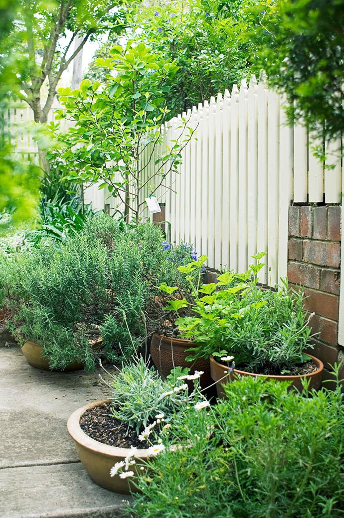 Fragrant herbs and spices such as mint and lemongrass will deter pests and be a delicious addition to any meal. *Photo: Jason Busch / bauersyndication.com.au*