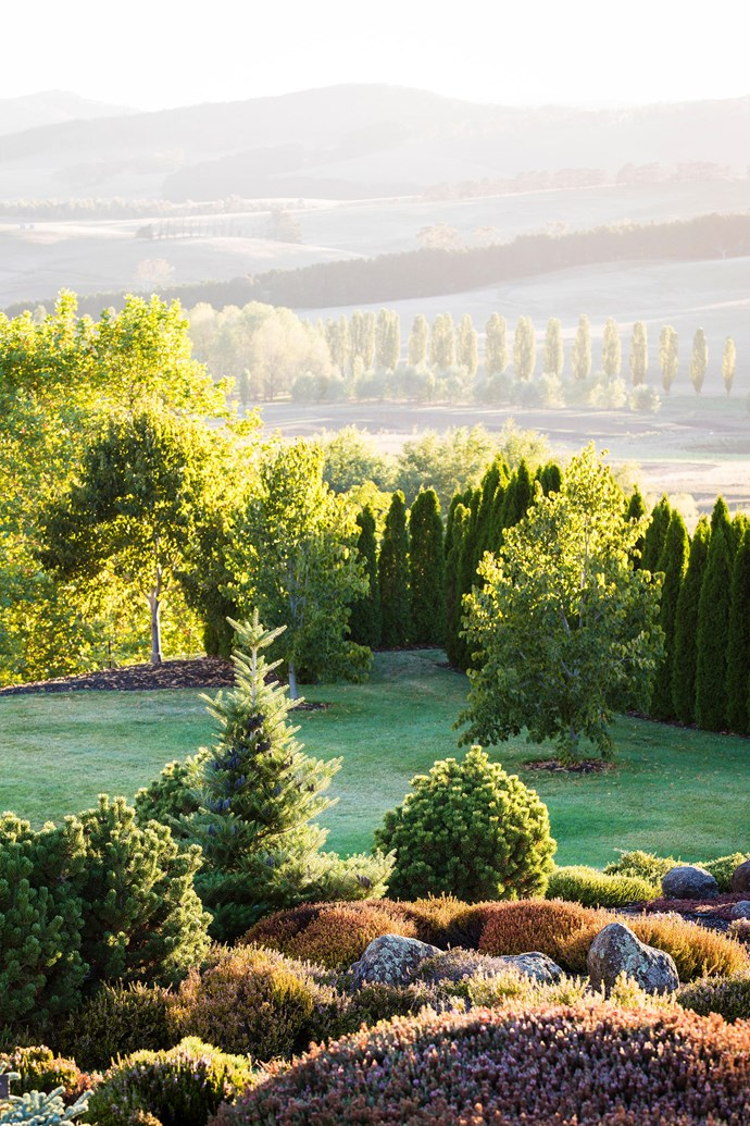 Prune off any remaining damaged foliage once the weather has cooled. *Photo: Claire Takacs / bauersyndication.com.au*