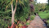 Tropical garden design: everything you need to know