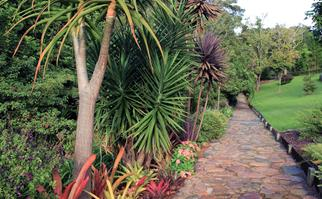 Tropical plantings bordering a stone pathway