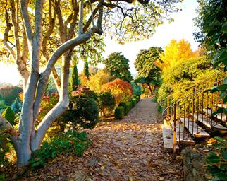 Garden pathway covered in orange leaves