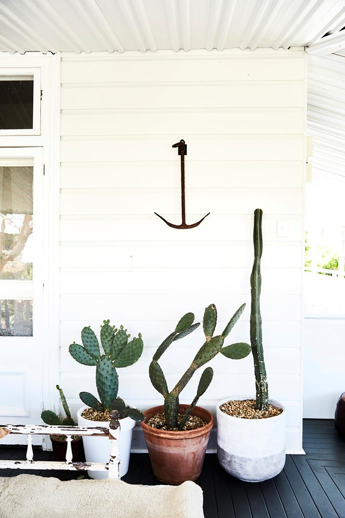 """Decking was painted in Dulux """"Domino"""" and creates contrast against the light walls. Potted cacti  are hardy and sculptural."""
