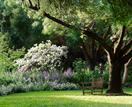 7 trees that add value to your property (and 3 that don't)