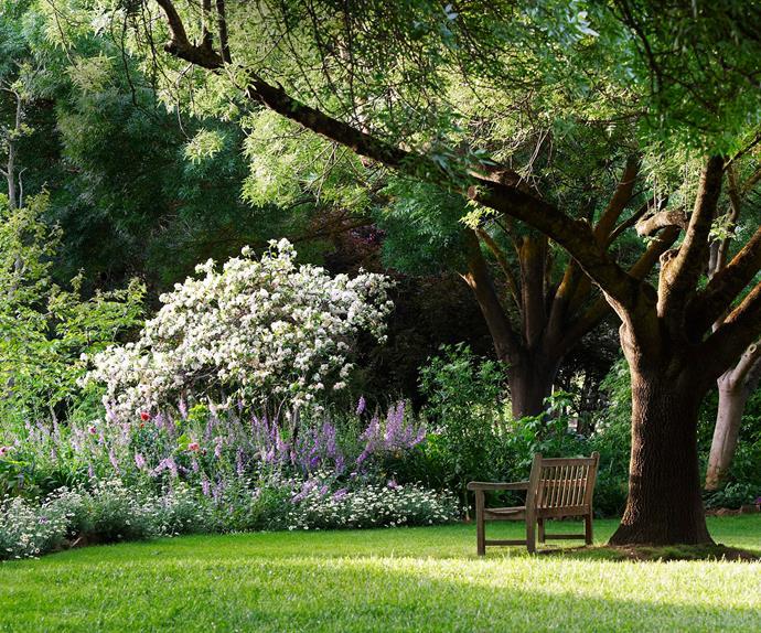 Bench seat beneath a large ash tree