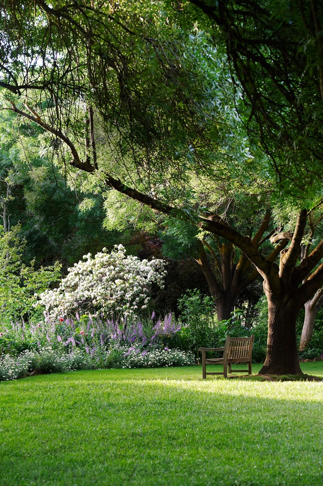 An ash tree provides a shady spot to sit on a hot summer's day.