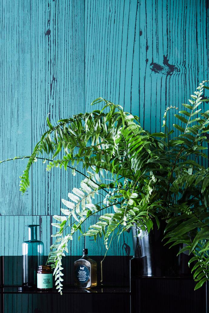 While most ferns are considered relatively low-maintenance, there are a few general rules for keeping them alive and thriving for years to come.