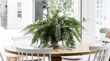 How to keep ferns thriving indoors and out