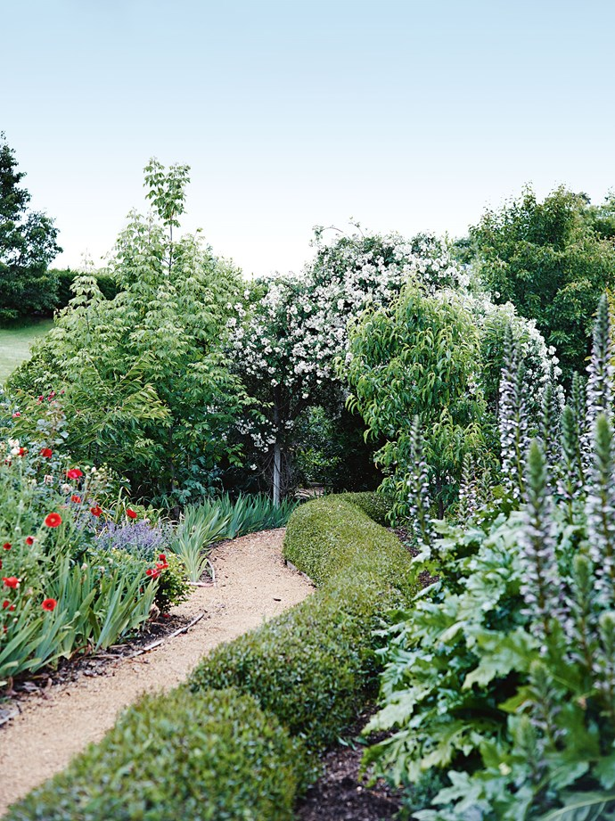 "A box hedge wanders past tall stems of oyster plant to an arch wreathed in 'Rambling Rector' roses. While being close to the cellar door and winery has its advantages, Susie has ensured their home also remains a haven of [privacy and seclusion inside thick hedges](https://www.homestolove.com.au/five-fast-growing-screening-plants-for-privacy-5164|target=""_blank""), and the lush and beautiful garden."