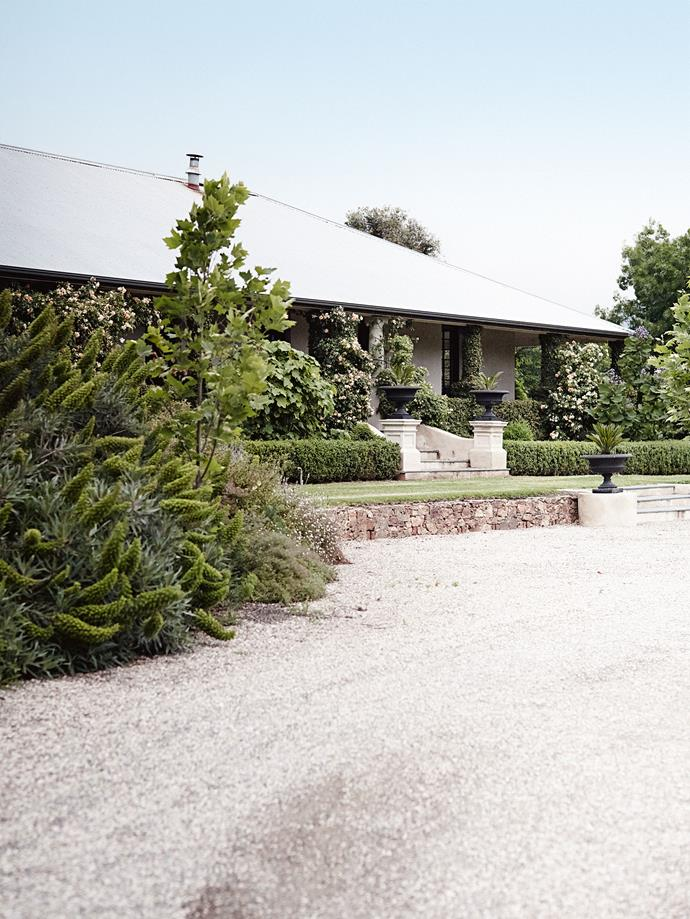 "'Crepiscule' roses and ficus hedges surround the front verandah. When the Nugents purchased the house in 1996, the house was neglected and sat in a far different landscape to its enchanting surrounds today. ""The property [had once been a dairy farm](https://www.homestolove.com.au/willow-farm-homestead-13727