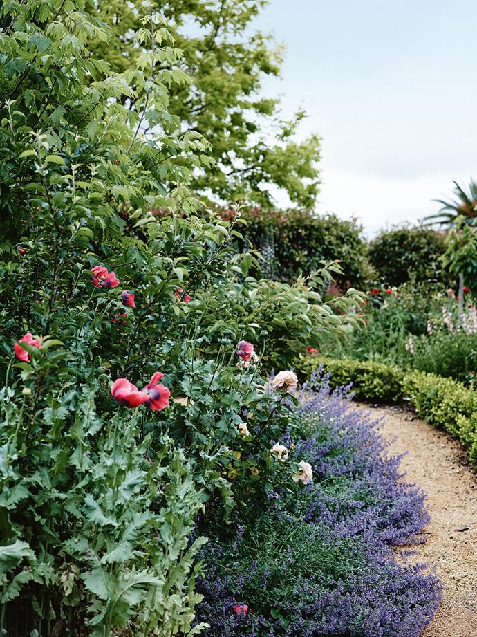 "A lush perennial border contains catmint, poppies, maple and apple trees, and a David Austin 'Glamis Castle' rose. Susie's enthusiasm for classical garden layouts led her to establish Susie Nugent Garden Design. ""People have seen my garden and the business has grown by word of mouth."""