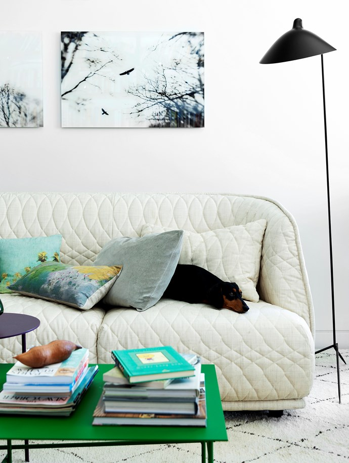 Miniature dachshund Gracie is curled up on the Moroso 'Redondo' sofa from Hub Furniture. Elena Lyakir photographs hang on the wall and the space is illuminated by a Serge Mouille 'Lampadaire' floor lamp. 'Shanghai Tip' green side table, Hub Furniture.