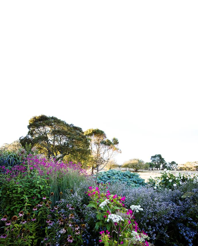 This corner of the garden looks out to the paddocks through a perennial border showcasing cerise Salvia 'Joan', pink coneflower (Echinacea), deep pink Mirabilis jalapa and white Angelica, silver-blue Melianthus major, blue Aster cordifolius 'Silver Spray' and white dahlias.