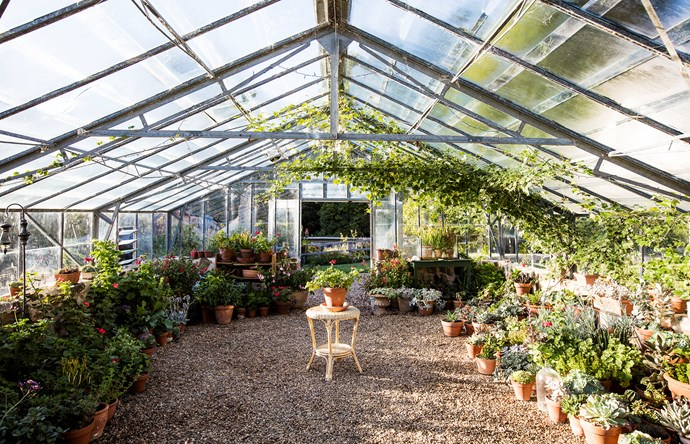 The vast, picture-perfect glasshouse contains Sarah's collection of succulents and geraniums, with porcelain berry (Ampelopsis brevipedunculata) climbing above.