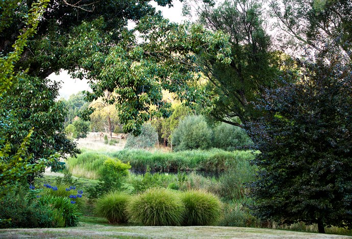 Poplar trees (Populus yunnanensis) and copper beech (Fagus sylvatica 'Atropurpurea') frame the view to the small dam where Sarah's plantings blur the boundary between garden and bush. Deep blue agapanthus and tufts of Miscanthus sinensis 'Gracillimus' add interest.