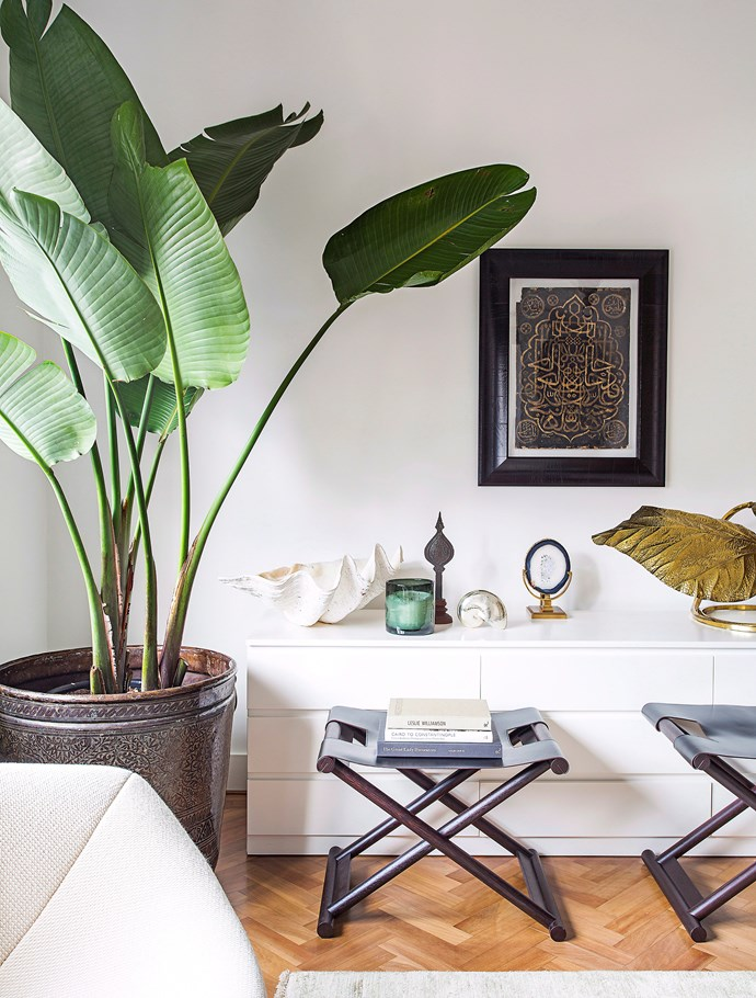 This Giant Bird of Paradise is thriving in this well-lit spot by the window. *Photo:* Felix Forest / *bauersyndication.com.au*
