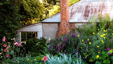 A flowering perennial garden in NSW