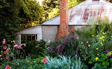A flowering perennial garden in NSW