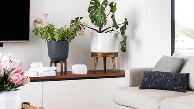 How to choose the best indoor plant for your home