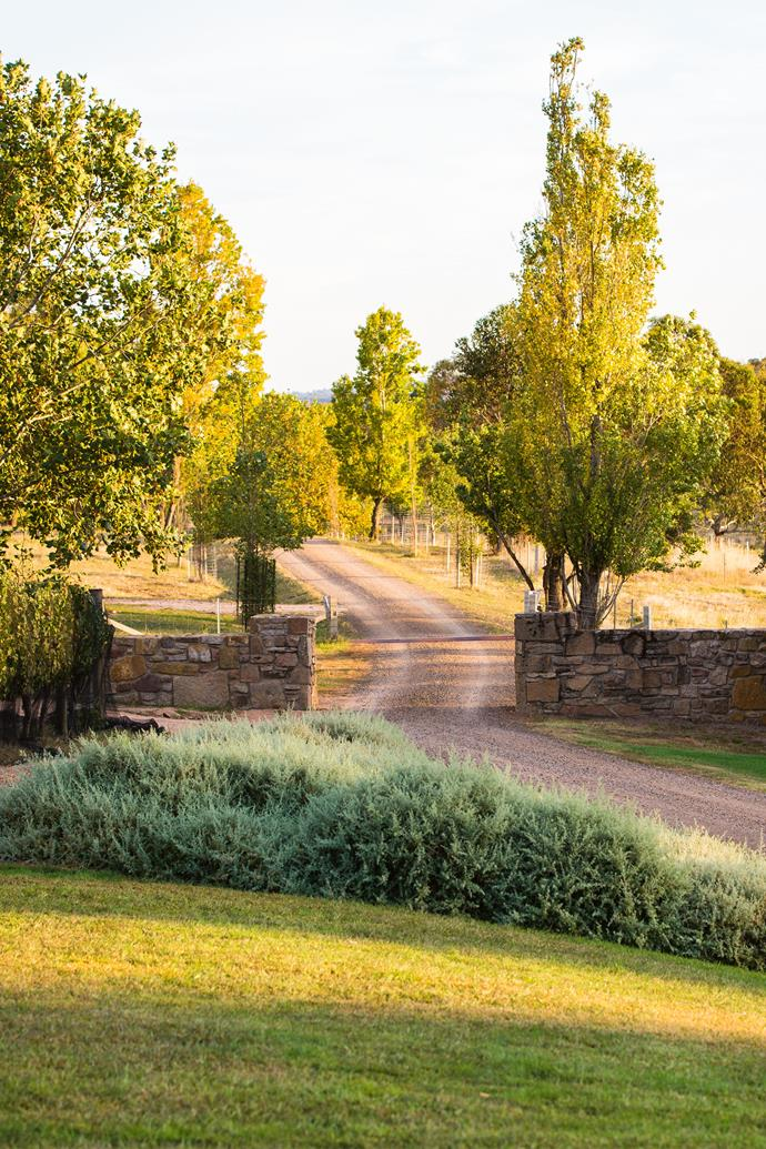 """""""We've kept the palette simple and subtle and just used lots of greys and silvers, which have picked up the bluey grey of the Cork oaks and put a bit of bronze in with some berberis,"""" says [landscape designer Robert Boyle](http://www.boylelandscape.com.au/