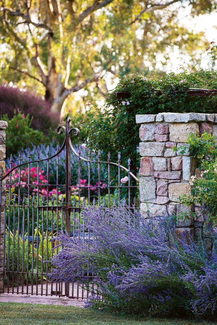 "The entrance gates to the walled vegetable and [rose garden](https://www.homestolove.com.au/rose-garden-at-sunnyhurst-winery-bridgetown-wa-12292|target=""_blank""). The Balls found the iron gates in Myrtleford at Red Ramia Trading. Mauve flowering Russian sage billows from the foot of the stone pillars. ""Ian always used to wish like crazy that he owned a farm, and I used to say, 'I don't know why we want one!' I went to look at The Falls kicking and screaming,"" says Joan."