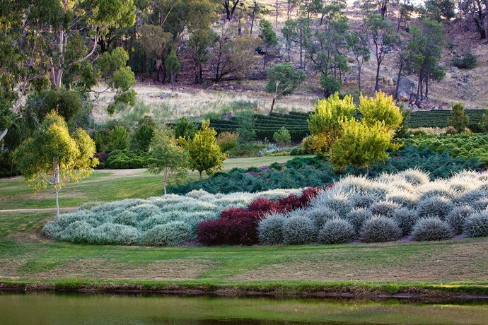 "The pavilion is surrounded by swathes of tall shimmering [ornamental grasses](https://www.homestolove.com.au/ornamental-grasses-australia-19276|target=""_blank""), Miscanthus transmorrisonensis seems to float at the water's edge and the white trunks of lemon-scented Eucalyptus citriodora along the drive reflect on the lake's surface."