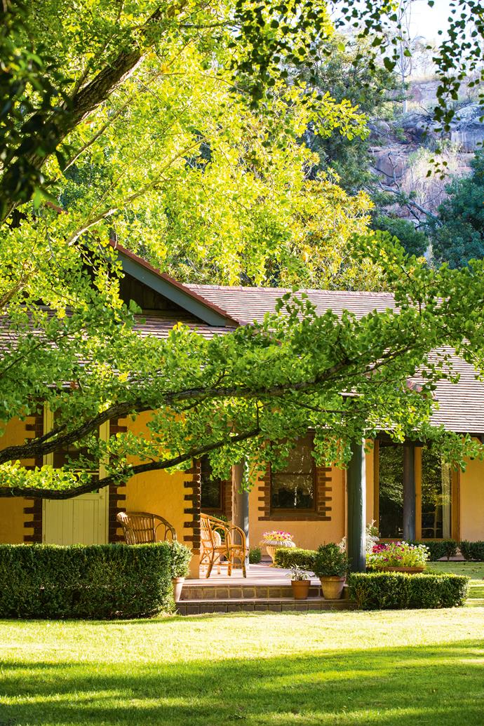 The large Ginkgo biloba shades the lawn in front of the house. The couple bought the then 240-hectare property and, for Ian, who had recently sold his interest in a retirement business and long thought of owning a farm, it was a dream come true.