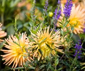 10 best autumn flowers