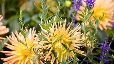 10 best autumn flowers