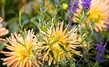 9 best autumn flowers
