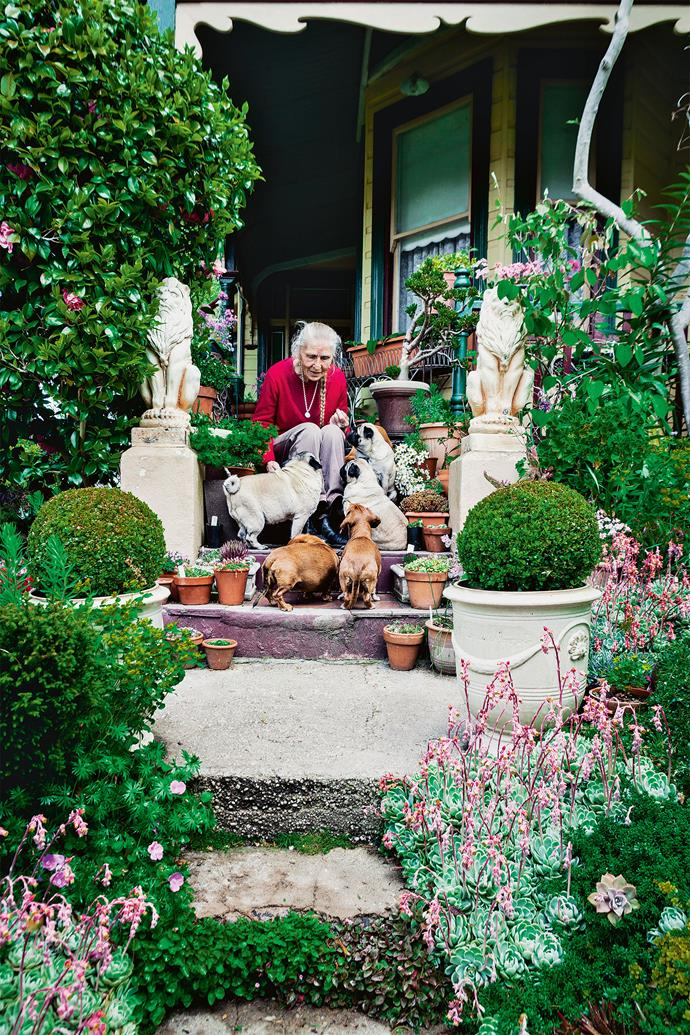 "Tricia enjoys the sun with her pugs and dachshunds. Her passion for rare [cool-climate plants](https://www.homestolove.com.au/blue-mountains-cool-climate-garden-19174|target=""_blank"") is evident from the succulent-encrusted front steps to the bottom of the terraced back garden. Many demand to be looked at on your knees — not necessarily in adulation, but to better see the dainty flowers on miniature offerings."