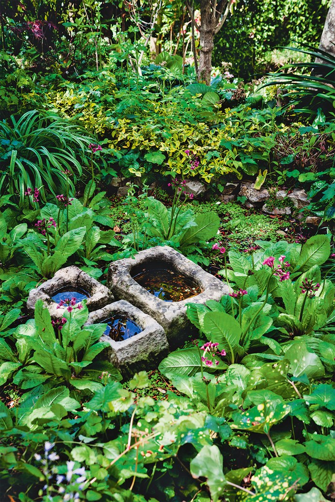 Water troughs nestled among primulas (Primula japonica). Tricia is not only keen to show others her plants, she also wants to share her growing tips and is generous with information and advice.
