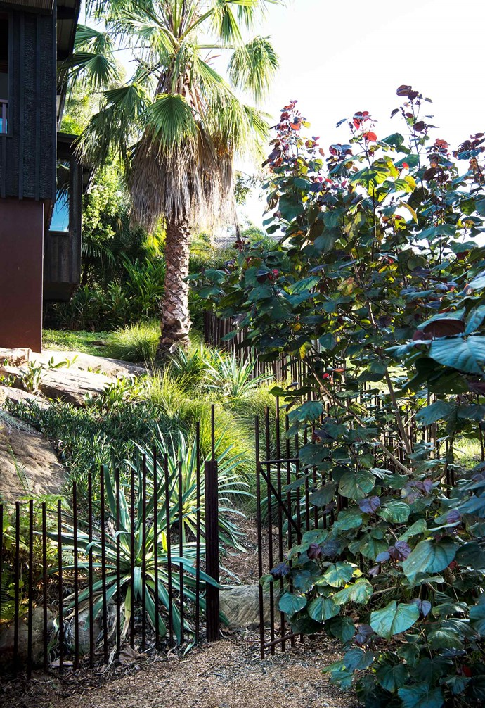 **Side garden** Fine-leafed Lomandra 'Tanika' wisps around untreated steel fence rods of random lengths hammered into the ground, while a cabbage tree palm (*Livistona australis*) connects to the local heritage. The red-leafed plant is red cottonwood (*Hibiscus tiliaceus rubra*).