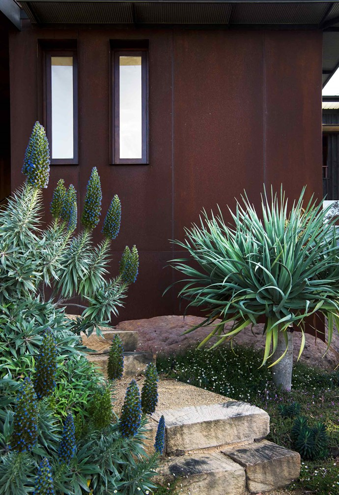 **Front garden** Pride of Madeira (*Echium fastuosum*) is stunning when in flower, and its foliage at other times adds sculptural form and silver tones to the Corten steel backdrop. It's one of Karen's favourite plants. A dragon tree (*Dracaena draco*) makes a dramatic focal point.