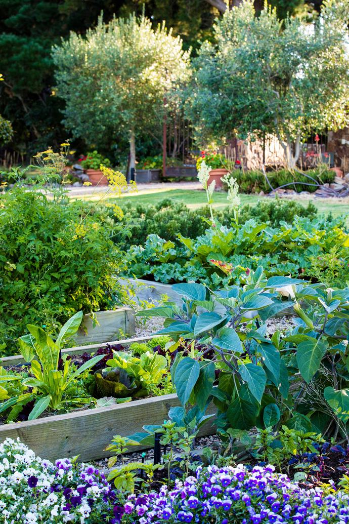 A sunny spot is the best place to put a vegie patch. *Photo: Claire Takacs / bauersyndication.com.au*
