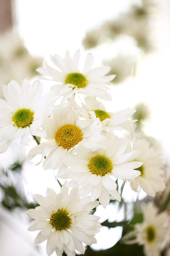 Some plants, such as daisies, will help repel unwanted insects and pests. *Photo: Paul Seusse / bauersyndication.com.au*