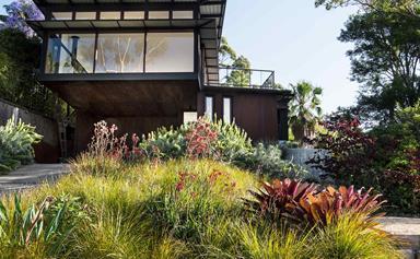 A coastal hilltop garden that embraces Australian natives