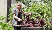 How to grow an organic home garden