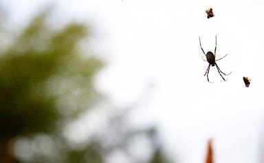 7 ways to spider-proof your house and garden